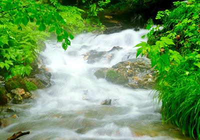 白神山地の天然水
