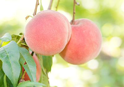 山形県産手むき白桃